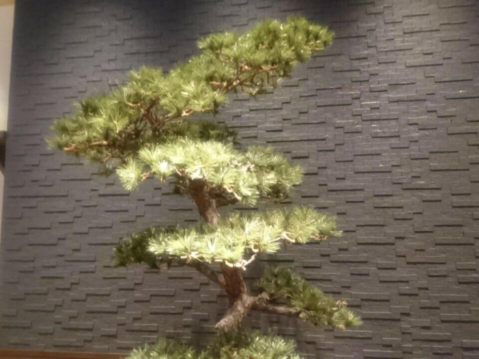 清水一芳園 三井アウトレットパーク札幌北広島 松の木